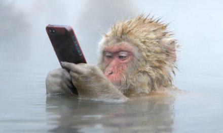 """""""Passzold vissza tesó!"""" avagy mobiltelefonnal a csimpánzokért és a gorillákért!"""